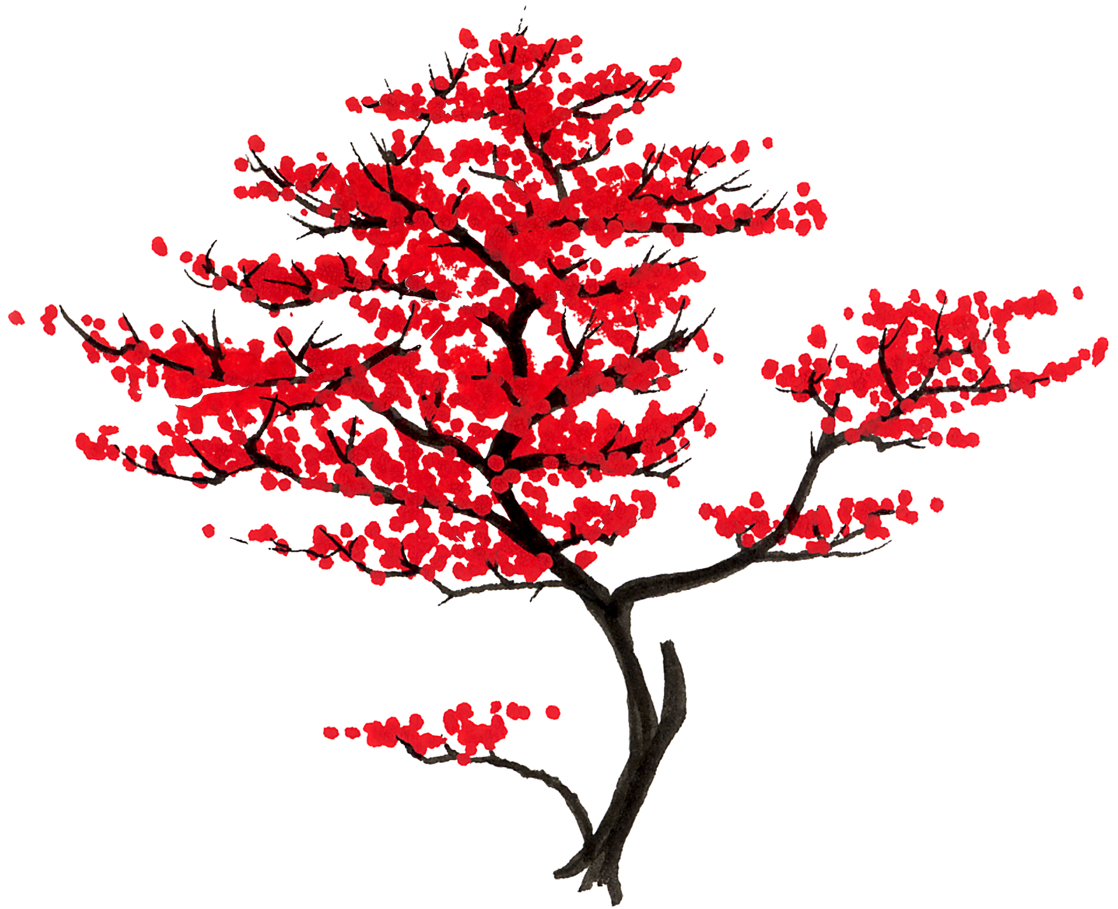 Expert Japanese Maple Pruning Maples Only